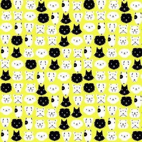 chiens en lignes fond jaune
