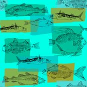 Rrfish3_shop_thumb