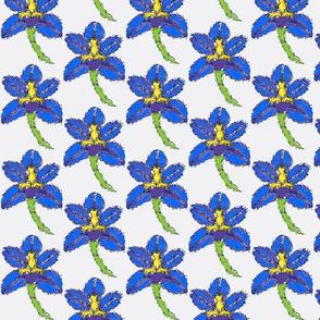 watery iris