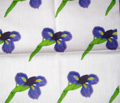 Japanese Iris Blossoms on White
