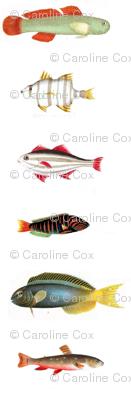 Lotsofish2_preview