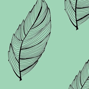 mint green and black feather leaf