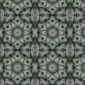 HG29b1 - Ferns