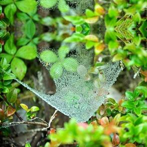 Waterweb Kaleidoscope