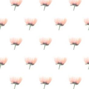 Pink Poppy Love
