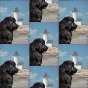 632984_rrrrrnewfoundland_and_lighthouse_portrait_style_shop_thumb
