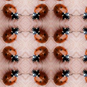 Ladybug 3 Large