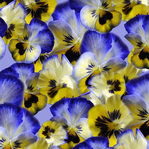 Blueand Yellow Pansies