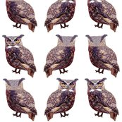 Rtuffed_ear_owls_shop_thumb