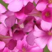 Rrrmini_real_flowers_shop_thumb
