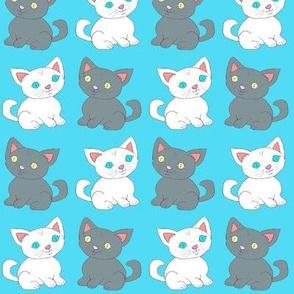 Dax & Max Kittens Blue