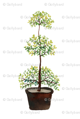 Triple Ball Myrtle -  Topiary Collection