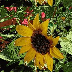 Kathys_08_028 Sunflower-ed-ch