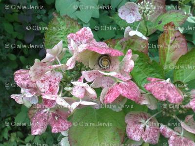 garden flower and snail (big)