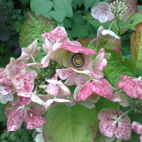garden flower and snail (big)