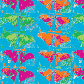 butterfly-ed-ed-ch-ch