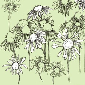Green Coneflower