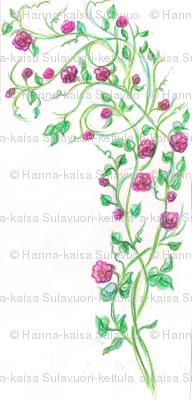 pink_rose_plant_drawing_scan