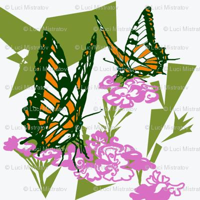 butterfly_orange_Luci_Mistratov