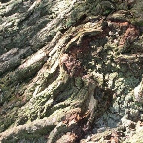 Gnarled Tree Bark 3 L