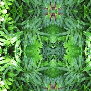 Leafy Goodness