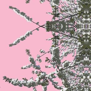 white cherry pink