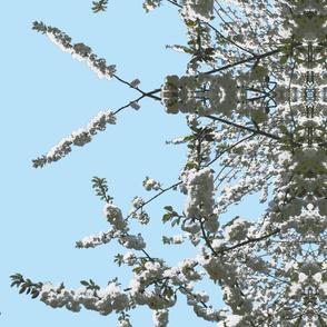 white cherry turquise