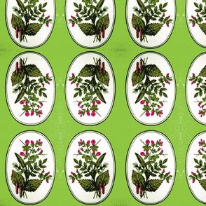 herbs green