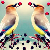 Rrrcedar_waxwing_with_toyon_berry_ed_ed_shop_thumb