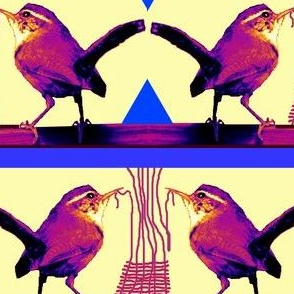 Weaving Wrens