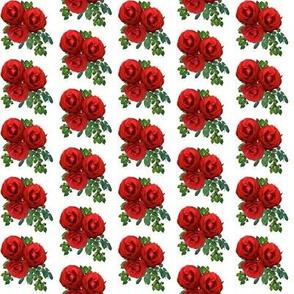 Roses Medium