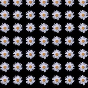9_Daisies_black_BG