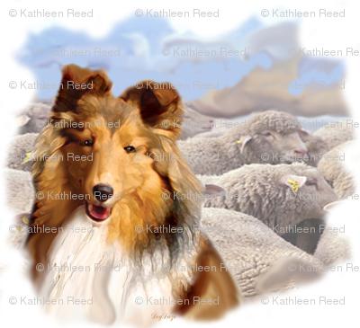 Shetland Sheepdog With Sheep