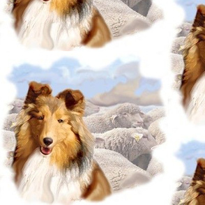 Shetland Sheepdog With Sheep