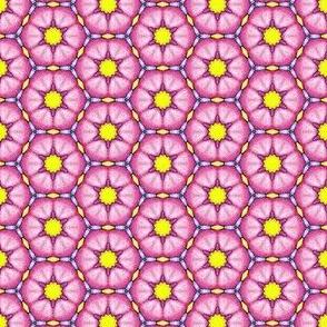 Cushionflowers