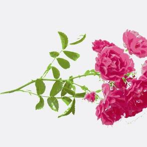tee rose