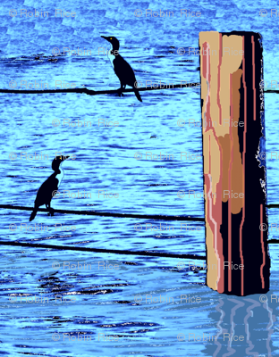 Water Birds and Pilings