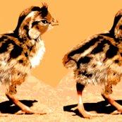 Rrrrrrrrrcalifornia_quail_chick_ed_ed_ed_ed_ed_ed_shop_thumb