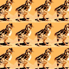 Why Did the Quail Chicks Cross the Road?