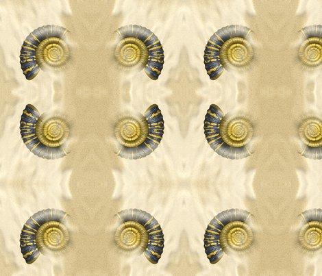 Rrr019_ammonite_l_copy_shop_preview