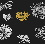 Japan Chrysanthemum 1877 No II