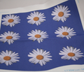 Rrrr9_daisies_black_bg_comment_108714_thumb