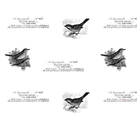 large vintage birds and script dark grey fabric by jennifer_rizzo on Spoonflower - custom fabric