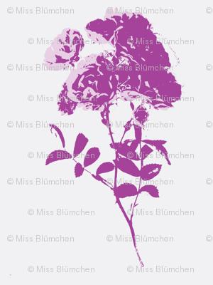 tea rose lilac