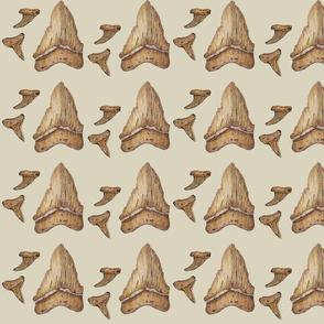 Shark Teeth Fossils