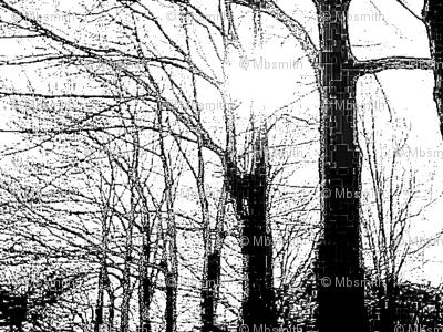 Winter Trees Webs