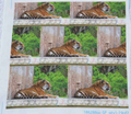 Rrone_tiger7622_comment_111729_thumb