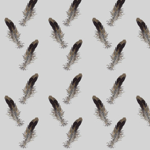 Small Bird Feathers