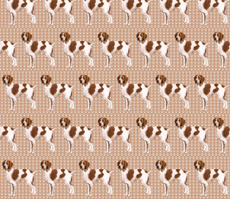 Rrbrittany_spaniel_standing_shop_preview