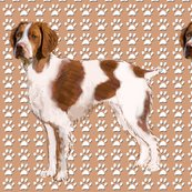 Rrbrittany_spaniel_standing_shop_thumb
